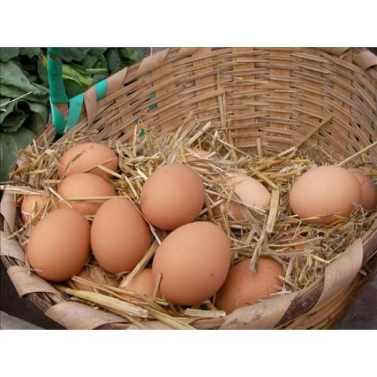 Organik Köy Yumurtası Adet 1